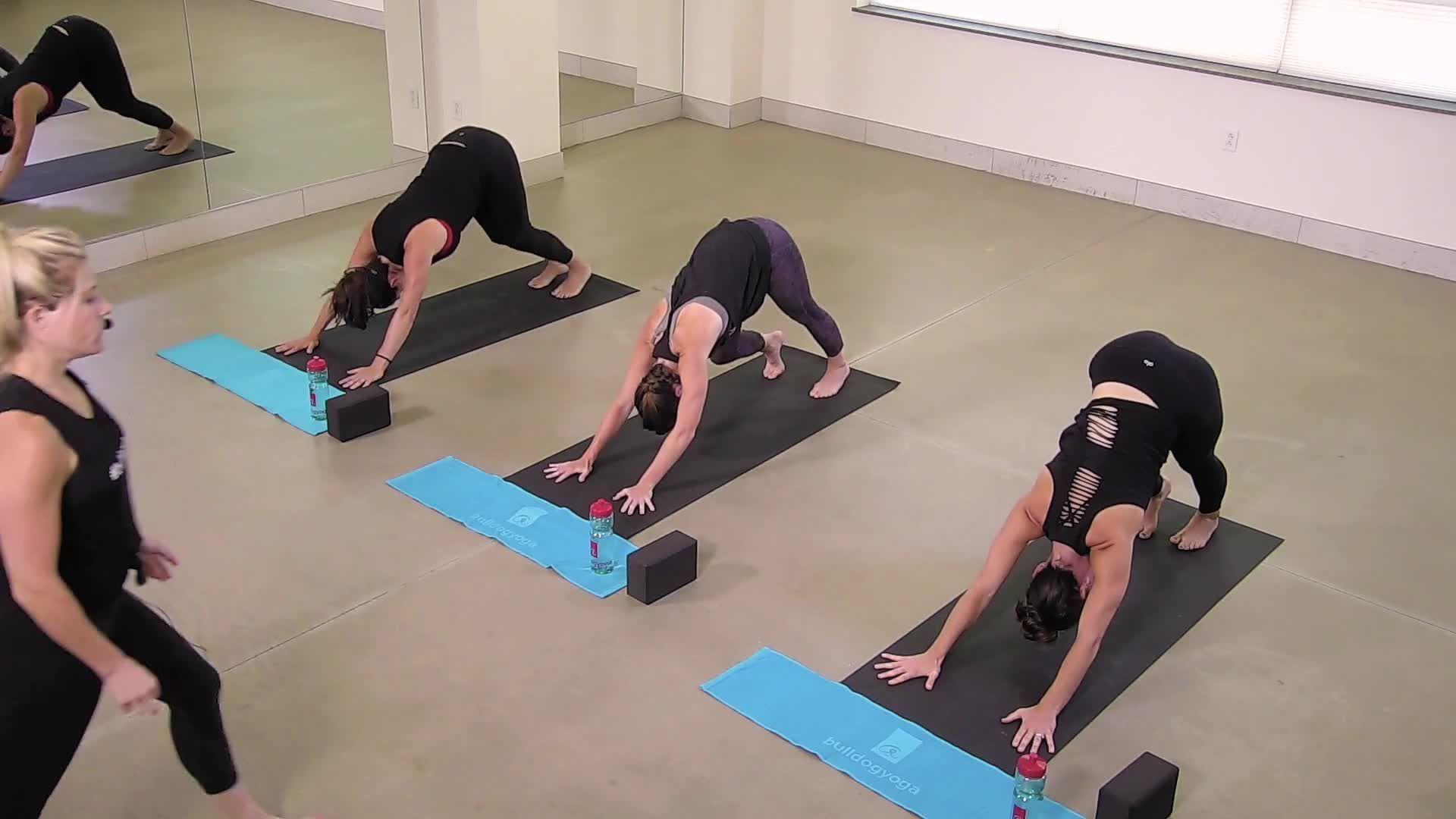 Bulldog Yoga Basics 2