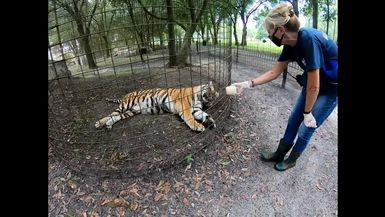 Aria Tiger and Keeper Marie