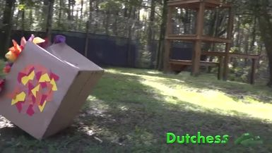 Big Cat VS Boxes Fall Edition (Reposted by Popular Request)
