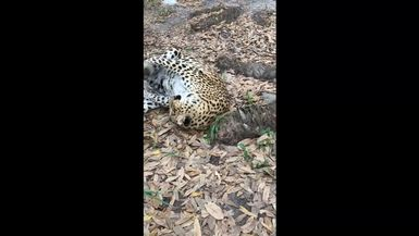 Here's a quick look at sneaky, playful Sundari!