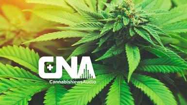 CannabisNewsAudio
