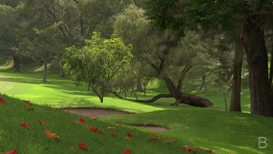 BELLA Presents: bello S1 Ep5 Tree