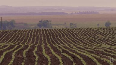 BELLA Presents: daily bello S1 Ep52 Plants in a Field