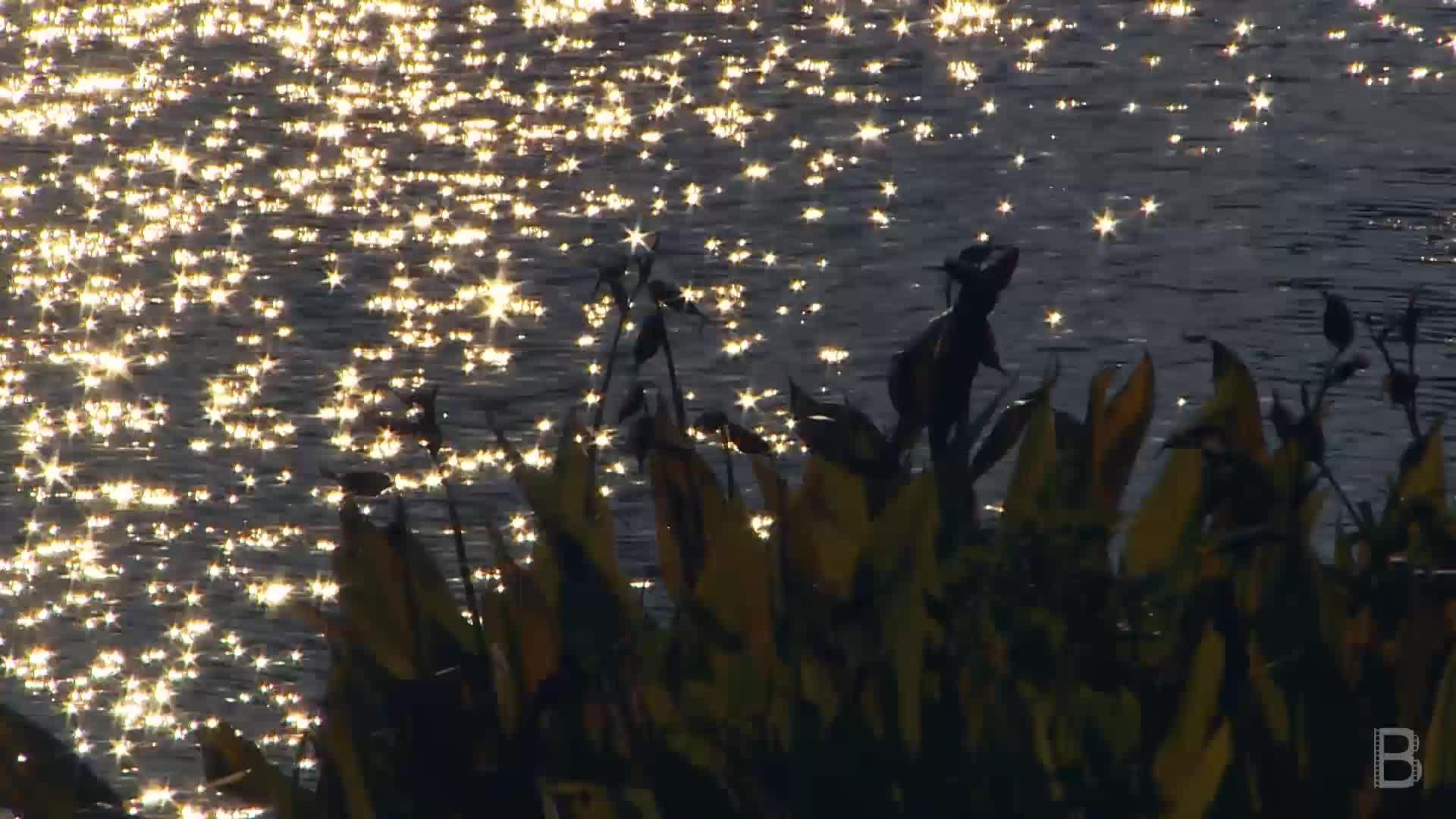 BELLA Presents: daily bello S1 Ep134 Calm by the River