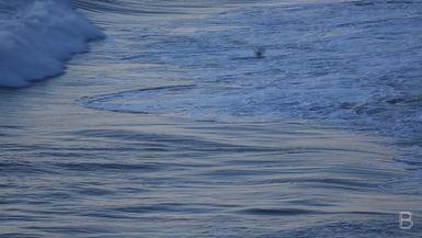 BELLA Presents: daily bello  S1 Ep38 Ocean Waves