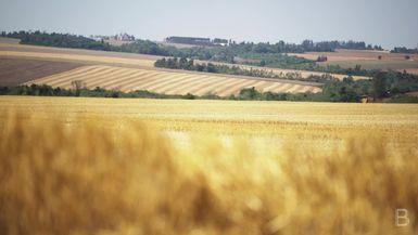 BELLA Presents: daily bello S1 Ep44 Peaceful Field