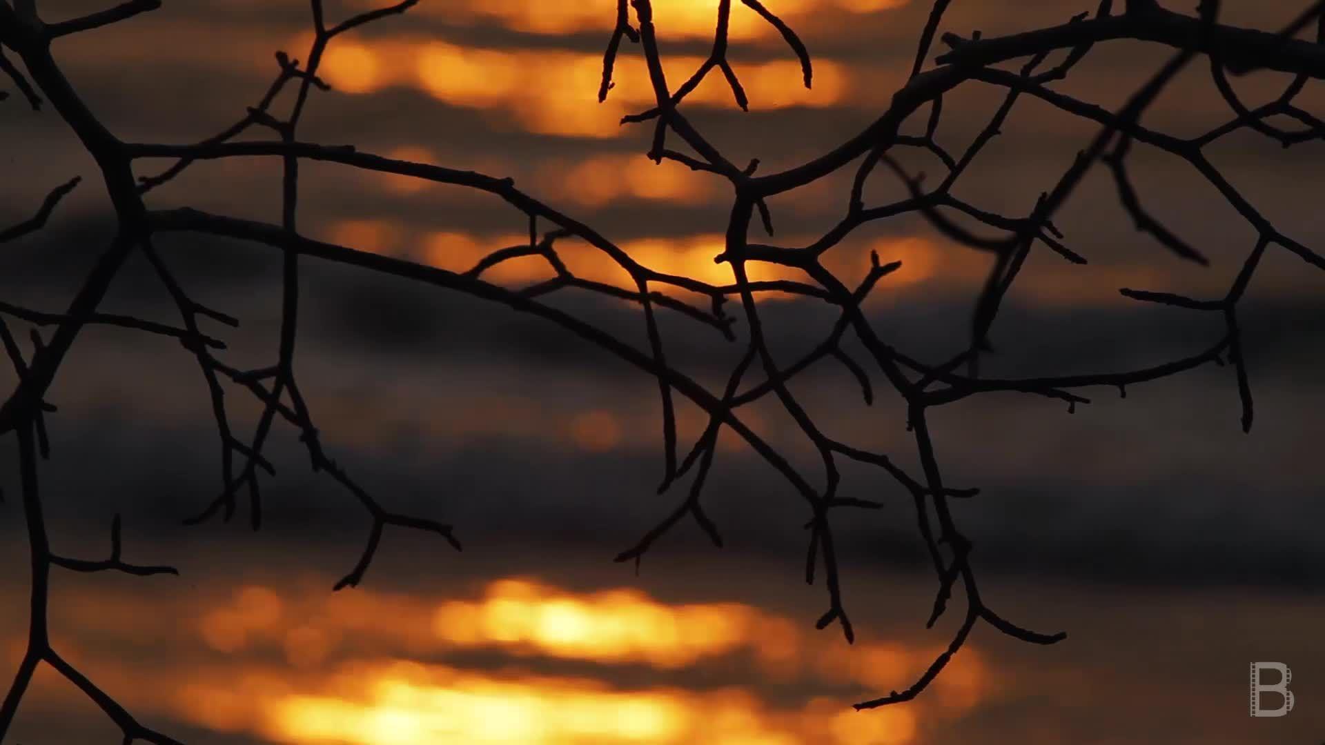 BELLA Presents: daily bello S1 Ep82 Sunset in Nosara Beach 2