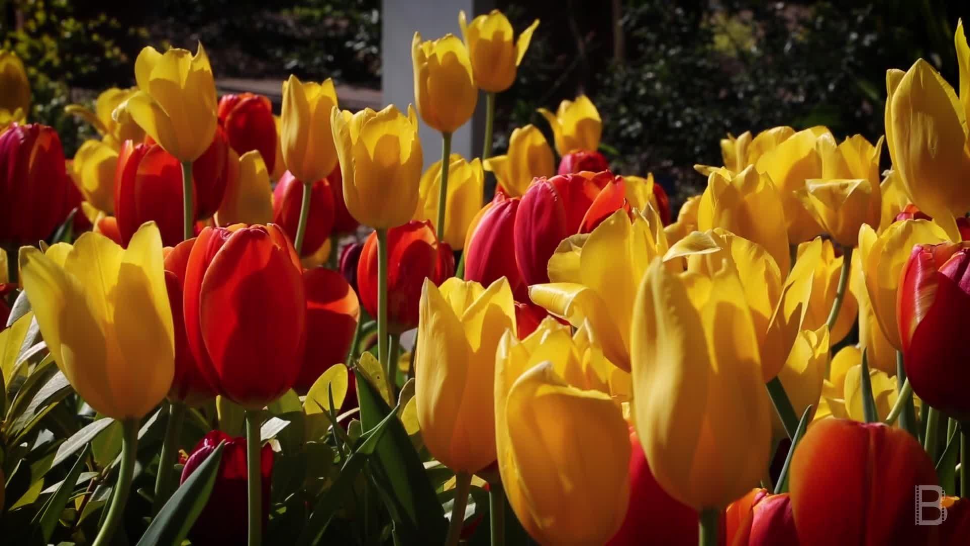BELLA Presents: bello S1 Ep2 Flowers