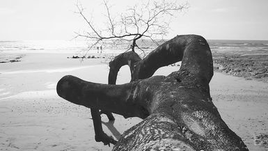 BELLA Presents: daily bello S1 Ep95 Nosara Beach Tree in Black & White