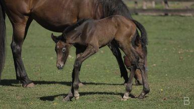 BELLA Presents: daily bello  S1 Ep39 Horse Farm