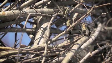 BELLA Presents: bello S1 Ep3 Branches