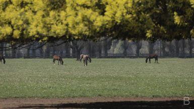 BELLA Presents: daily bello  S1 Ep41 Horses Field