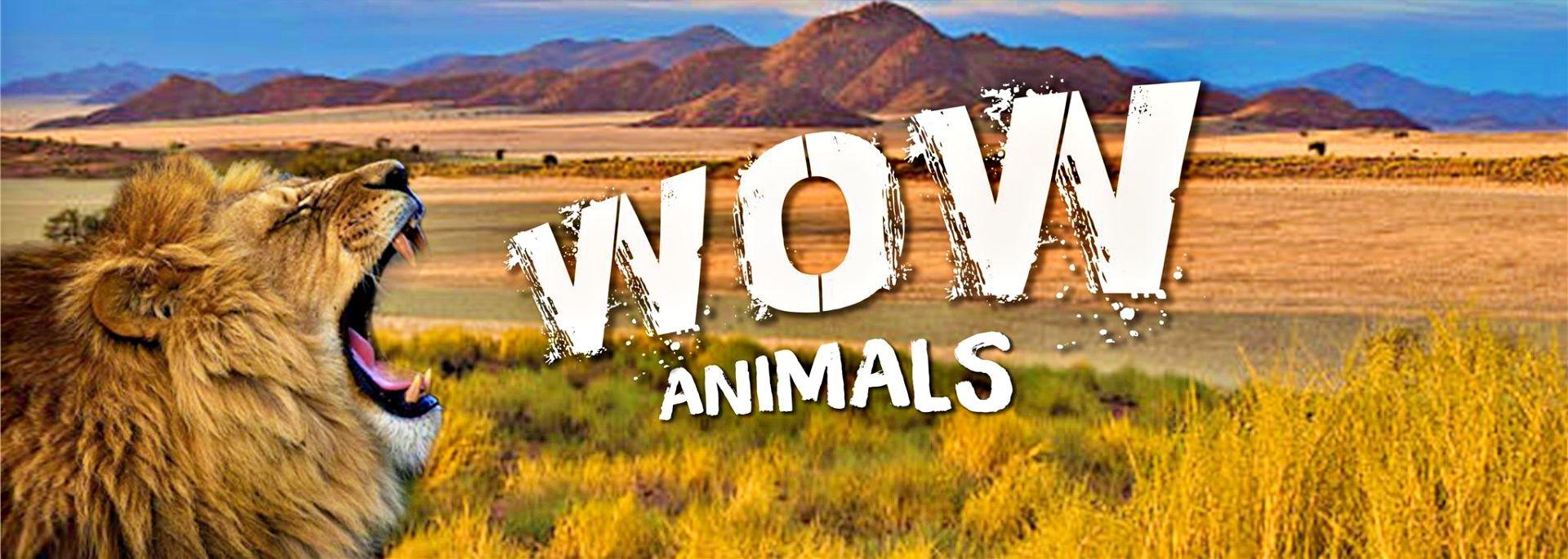 Wow Animals channel