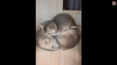 Cute is Not Enough - Cute Kittens In The World