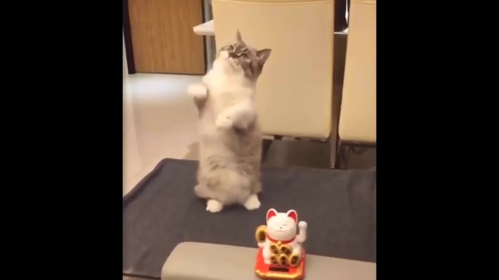 Aww - Funny and Cute Animals Compilation
