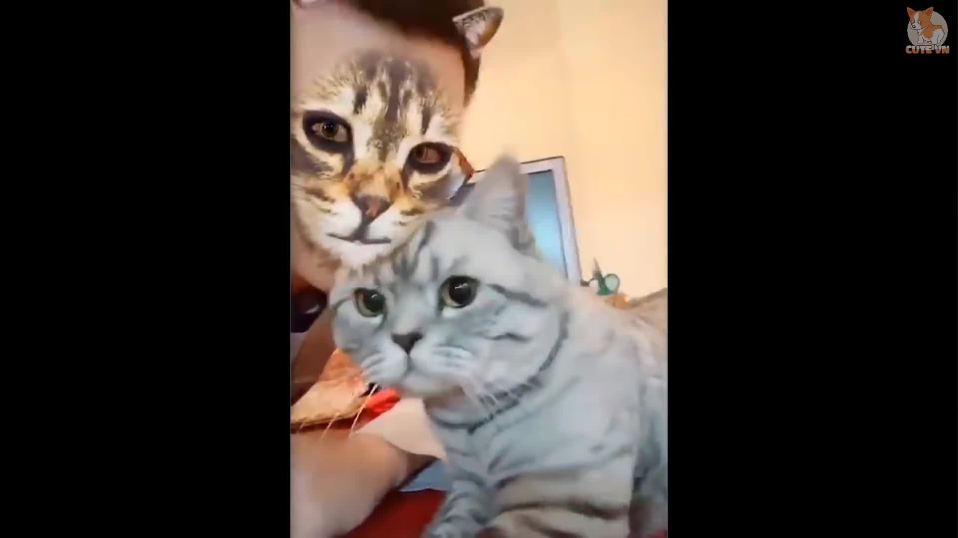 Funny Dogs & Cats Scared Of Cat Mask Filter